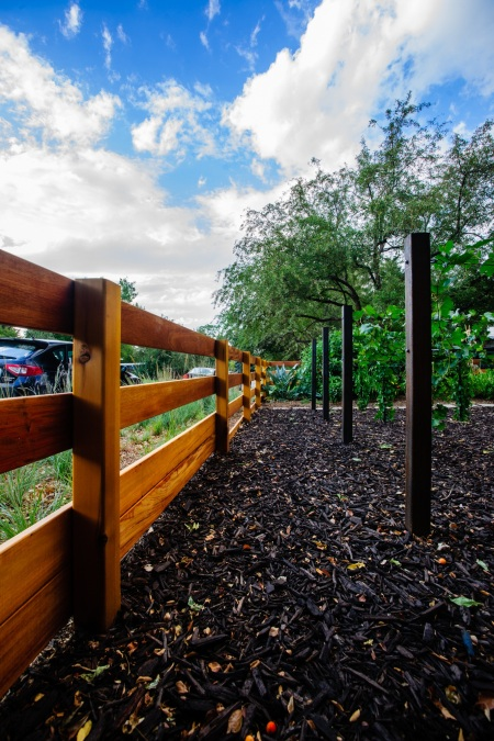Fence and grapes