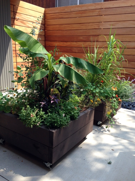 planters in summer
